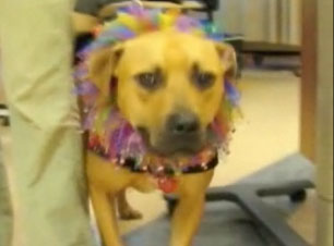 Vick Dog Gets a Second Chance, Shares With Cancer Patients