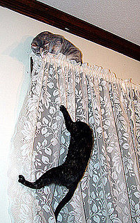 Do Tell: Is Your Cat a Climber?