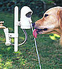 Hydrate Fido With WaterDog