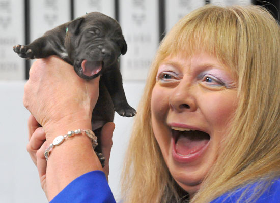 Bernann McKinney and Five Commercially Cloned Puppies of her Late Pit Bull, Booger Make Their Debut in Korea