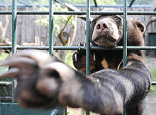 It's No Lie That Lil Lailani Is the Cutest Sun Bear!