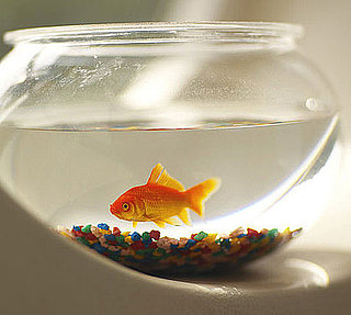 Have You Ever Owned a Fish?