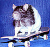 Skateboarding Rats: In the LINK of an Eye!