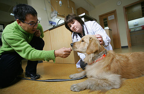 To the Rescue: Getting Ready for Your Dog's Day With the Doc
