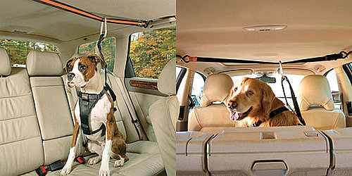 Pampered Pals: Zip Line Dog Car Harnesses