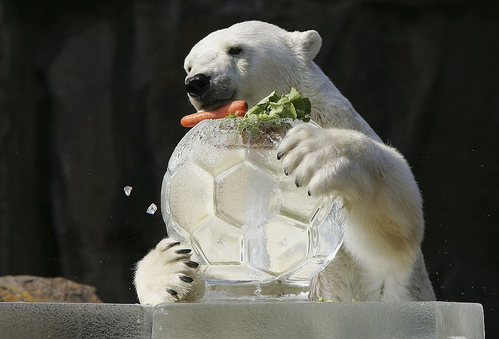 Ice, Ice Baby: Frozen Treats for Zoo Friends