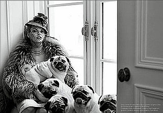 Pugs Strike a Pose in Vogue