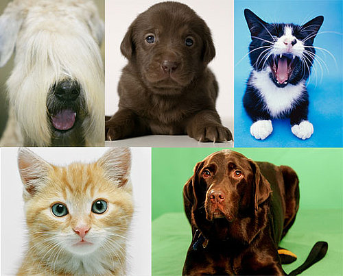 A Nose By Any Other Color: Which Hue Is Your Pet's Snout?