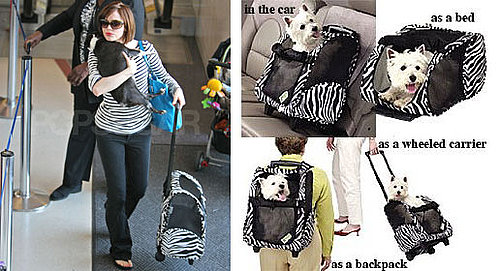 Found! Rose McGowan's Four-in-One Pet Carrier