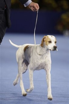 Holly Wins 2008 National Dog Show!
