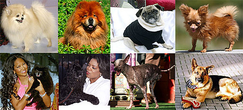 Most Missed Celebrity Pet or Celebripup?