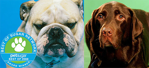 The Results Are In: Most Popular Dog Breed