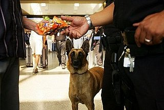 Muslim Travelers May Avoid Sniffer Dog Checks Citing Religion