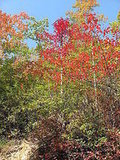 TN Foliage 2008