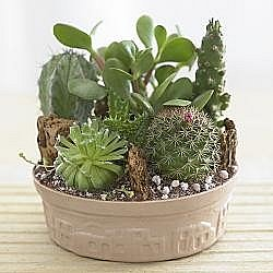miniature cactus garden 