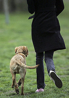 One in Five UK Dogs Miss Their Daily Walk, Pack on Pounds