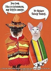 Will you have a muy feliz Cinco de Mayo?