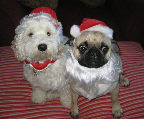 Bailey and Jager are ready for Christmas!
