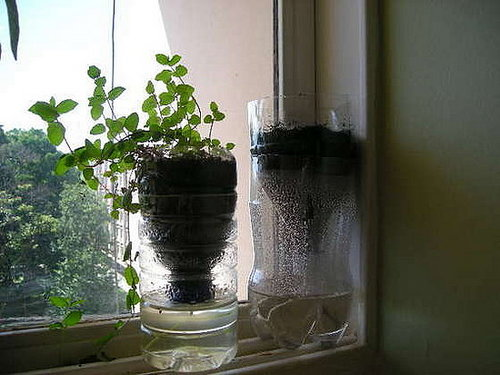 DIY: Self-Watering Recycled Vase