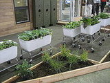 A green home is even more sustainable when it can raise some of its own food. The Food Map Containers ($245) make this possible. I love the wheels, which make for easy transportation to take advantage of the sun on a patio or deck. In the background, Rainwater Hogs store rainwater.