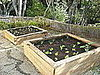 Garden Therapy:  New Garden Boxes From Old Wood