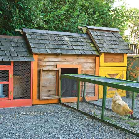 Carlson built her chicken coop as well, whose bright trim adds a fun element. The three hens spend their days in the garden, eating insects and scratching the soil, which encourages soil health.