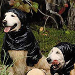 Montcler Shows Off Shiny Jackets With Help From a Few Dogs