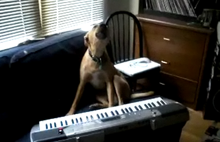 Dog Sings While Playing the Keyboard