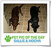 Pet Pics on PetSugar 2009-02-27 09:00:36