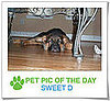Pet Pics on PetSugar 2009-02-26 09:30:50