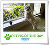 Pet Pics on PetSugar 2009-03-12 09:30:39