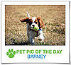 Pet Pics on PetSugar 2009-04-07 09:30:37