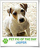 Pet Pics on PetSugar 2009-04-17 09:00:14