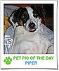 Pet Pics on PetSugar 2009-04-24 09:00:38