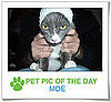 Pet Pics on PetSugar 2009-04-22 09:00:47