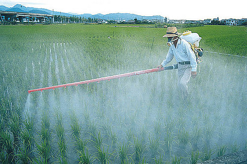 Environmental Working Group's Printable Pesticide Produce List