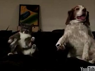 Dog and Cat Play Wii Tennis