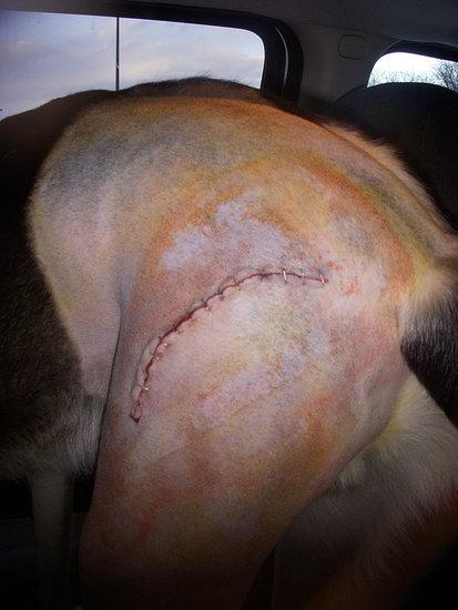 Ugh...terrible frankenstein scar. :(