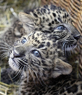 Zounds! Zhongni and Zhang Jie Have Dazzling Baby Blues