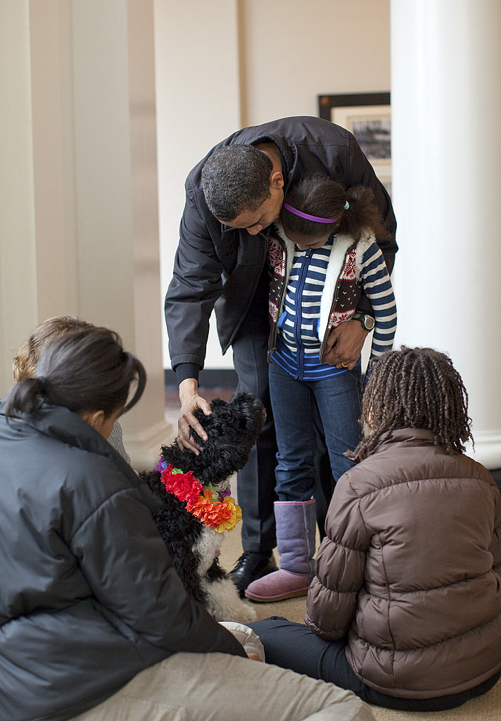 "Meet Bo: The Obamas ""First Dog"""
