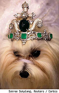 Dog Gets a $4.2 Million Tiara: In the LINK of an Eye!