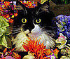 Pet Pic of the Day: Fezzick's Flowery Romp