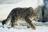Apple Announces Snow Leopard At 2009 WWDC