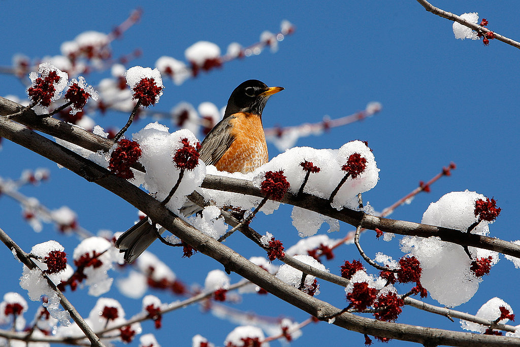 Further south in Charlotte, NC, a robin reminds us that Spring will come soon!