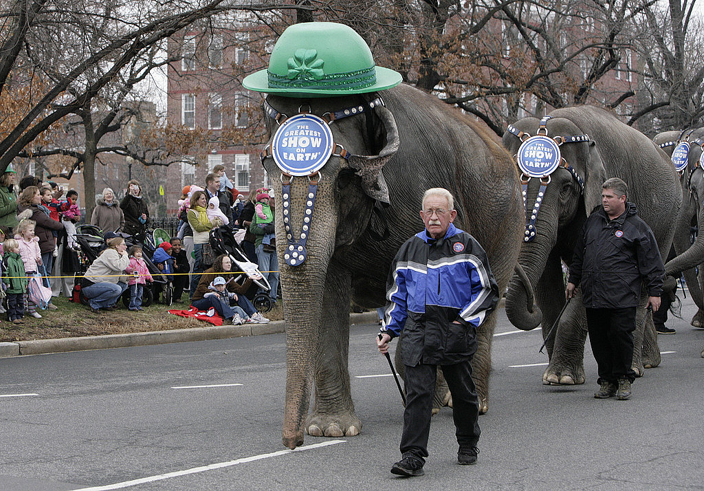 Elephants from the the Ringling Bros. and Barnum and Bailey circus take part in Washington DC's parade.