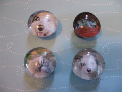 Frame Fido on your fridge with Craftstylish's pet magnets.