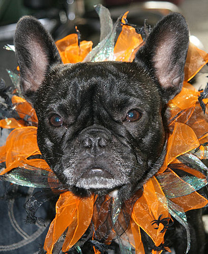 To the Rescue: Halloween Costumes and Your Pet