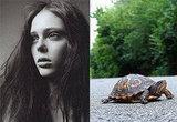 Coco-Turtle