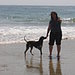 Arroyo Burro Dog Beach in Santa Barbara, CA