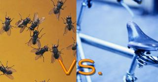 Biking:  Bugs vs. Saddle Sore - Which Is Worse?